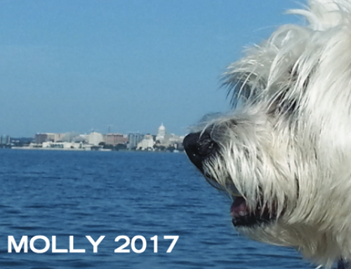 Celebrate Molly All Year Long